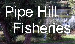 Pipe Hill Fisheries