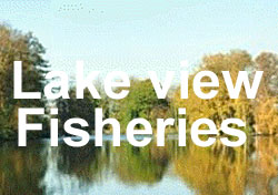 Lake View Fisheries