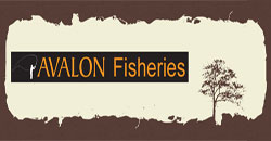 Avalon Fisheries