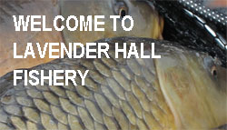 Lavender Hall Fishery