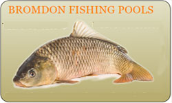 Bromdon Fishing Pools